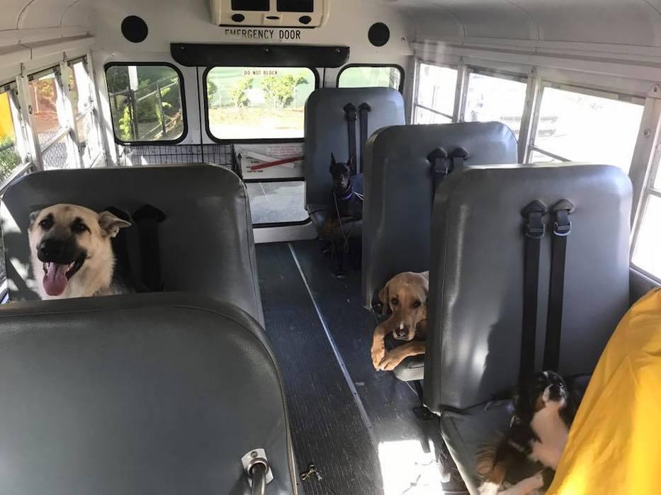doglando dog bus inside