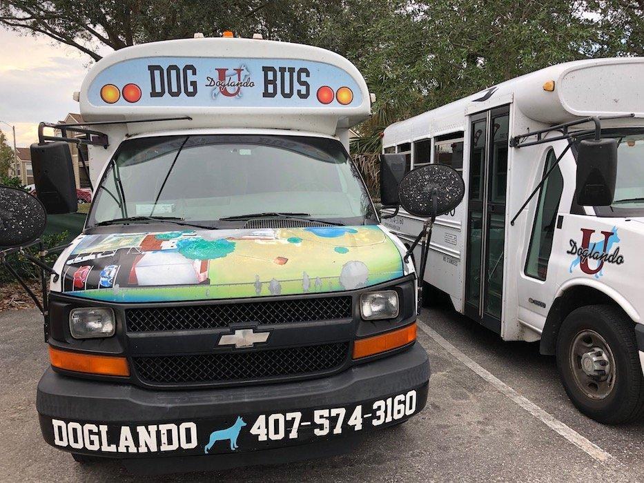 doglando dog bus