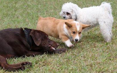 3 Key Strategies to Effective Puppy Socialization Success!