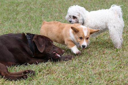 3 Key Strategies to Effective Puppy Socialization Success!