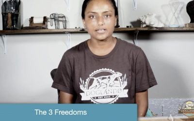 The Three Freedoms