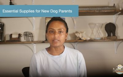Essential Supplies for New Dog Parents