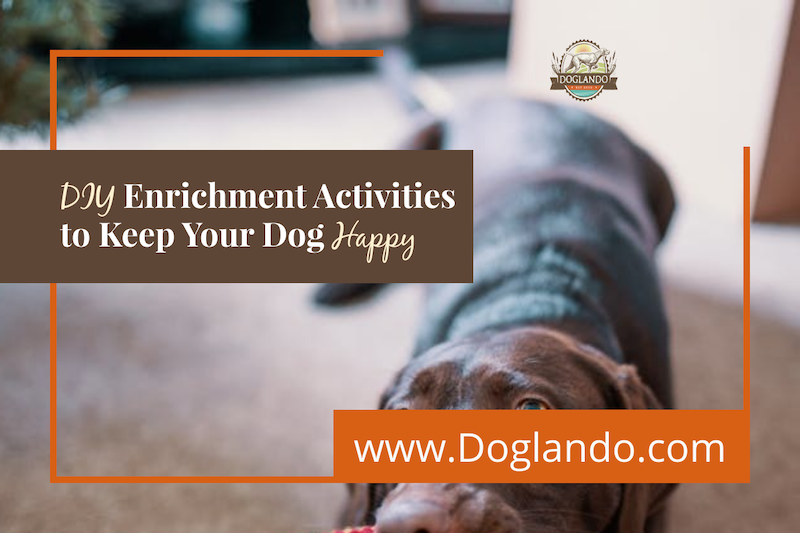 DIY Enrichment Activities to Keep Your Dog Happy
