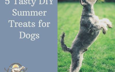 5 Tasty DIY Summer Treats For Dogs