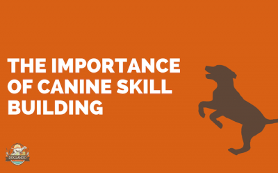 Deepen Your Relationship With Your Dog Through Skill Building
