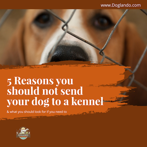 5 Reasons you should not send your dog to a kennel