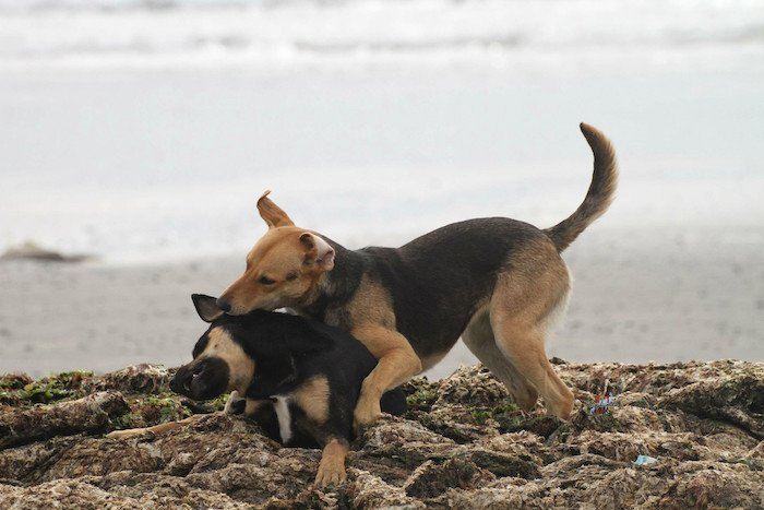 street dogs beach