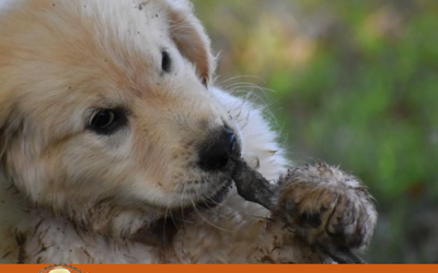 How to stop your puppy from chewing everything?