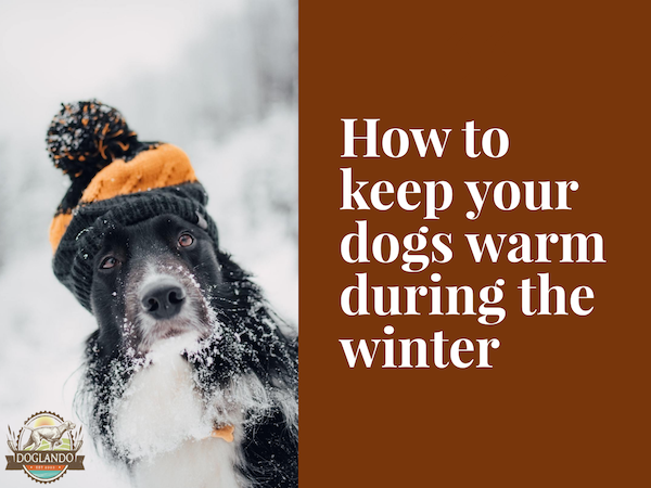 How to keep your dogs warm during the winter
